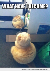 fuuny-what-have-i-done-mirror-fat-cat-pics