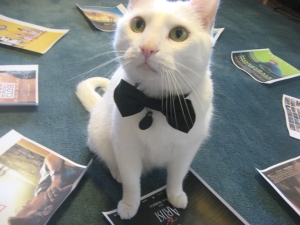 Yes, my kittays will be attending in black tie attire.