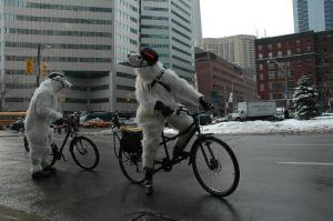 polar-bear-bike