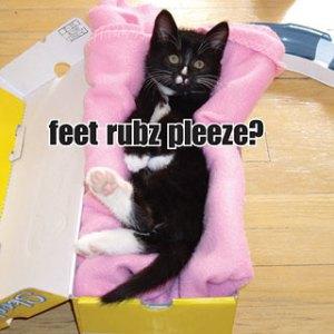 itteh-bitteh-book-kittens_320x320
