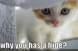 LOLcat hide